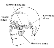 sinus-graphic.jpg